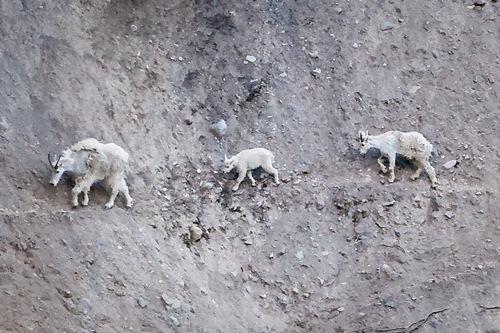 0 0 mountain_goat_trail