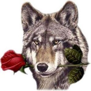 0 одинокий волк