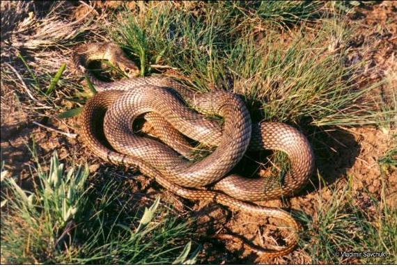 1 Змей